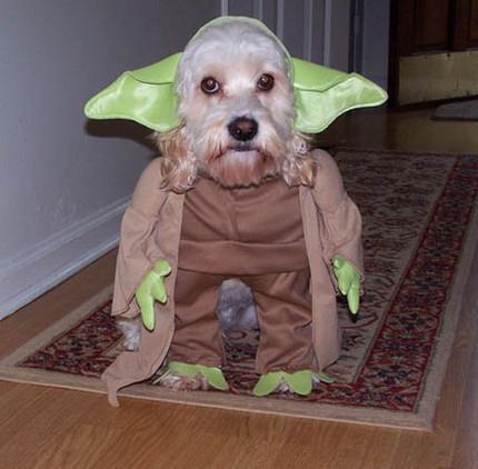 LOS COSPLAY MAS GRACIOSOS Funny-cosplay-dog41